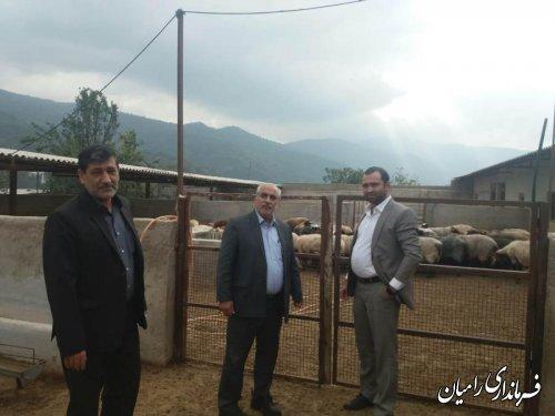 پروژه اصلاح نژاد گوسفند نقش مهمی در پایداری تولید و اشتغال شهرستان رامیان دارد