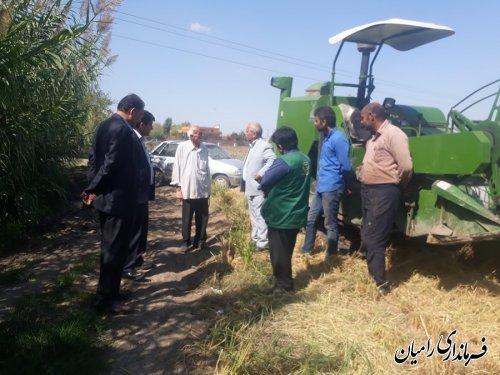 بازدید فرماندار رامیان از مزرعه کشت خشکه کاری برنج در بخش فندرسک شهرستان رامیان